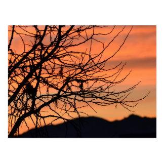 Orange Winter Sky Post Card