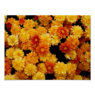 Orange Yellow Mums Poster
