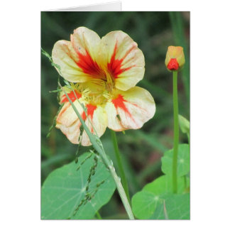 Orange Yellow Nasturtium Flower Greeting Card