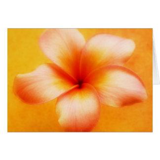 Orange Yellow Plumeria Flower Orange Background Card