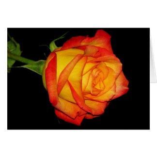 Orange-Yellow Rose Card