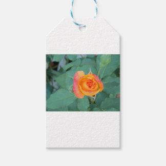 orange yellow rose flower gift tags