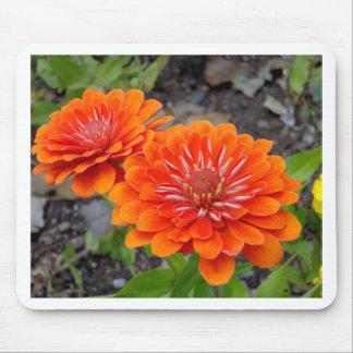 Orange Zinnia flowers Mouse Pad