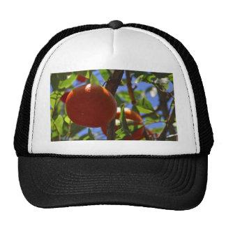 Oranges Fruit Trees Hats