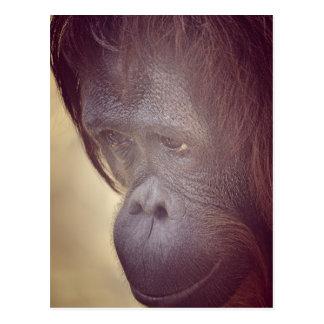 Orangutan Blue Postcard