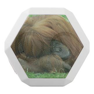 Orangutan White Boombot Rex Bluetooth Speaker