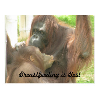 Orangutan Breastfeeding Postcard