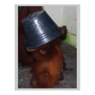 Orangutan Hide and Seek Postcard