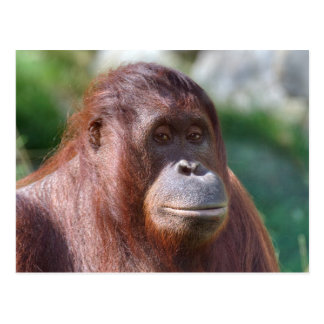 Orangutan Lady Postcard