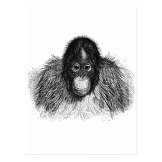 Orangutan Monkey Chimp Elegant Drawing Postcard