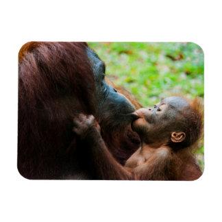 Orangutan mother and baby rectangular photo magnet