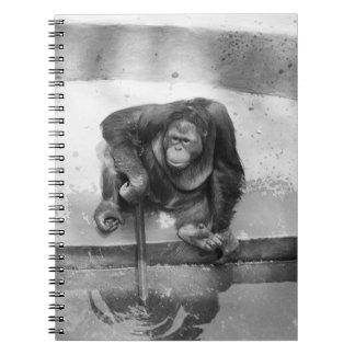 Orangutan Notebooks