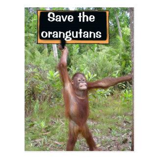 Orangutan Protest Sign Postcard