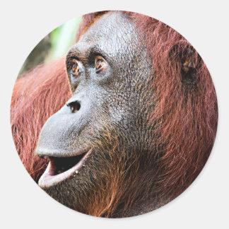 Orangutan Round Sticker