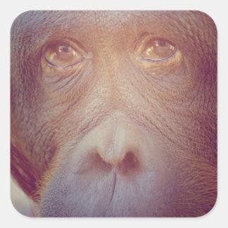 orangutan sad face square sticker