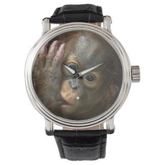 Orangutan Watch