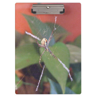 Orb Spider Clipboard