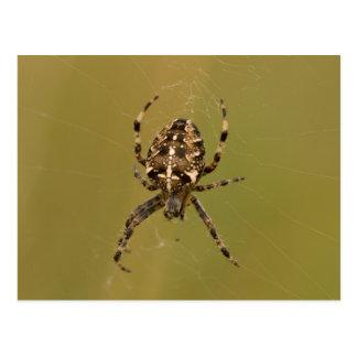 Orb-weaver Spider Postcard
