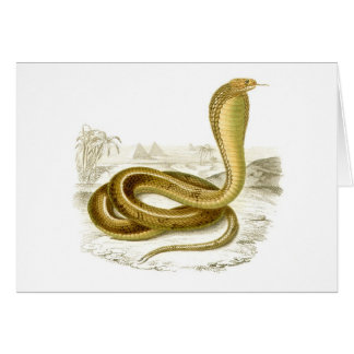 Orbigny - Egyptian Cobra - Naja haje Card