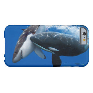 Orca attacks white shark