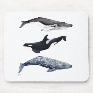 Orca, hunchbacked whale and gray whale mouse pad