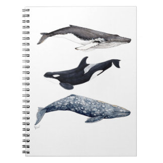 Orca, hunchbacked whale and gray whale spiral notebook