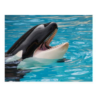 Orca - Killer Whale Postcard