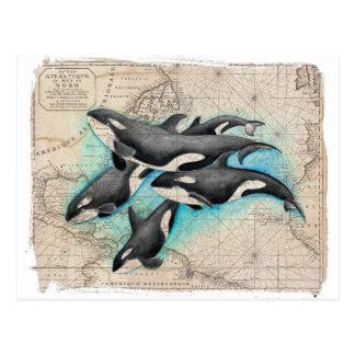 Orca Map Atlas Postcard