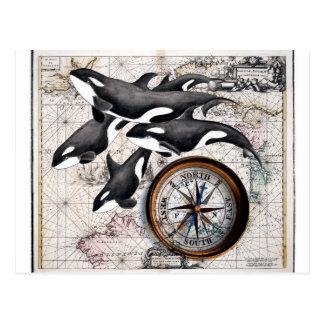 Orca Nautical Compass Postcard