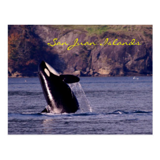 Orca of the San Juan Islands Postcard