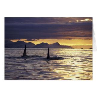 Orca or Killer whales Card