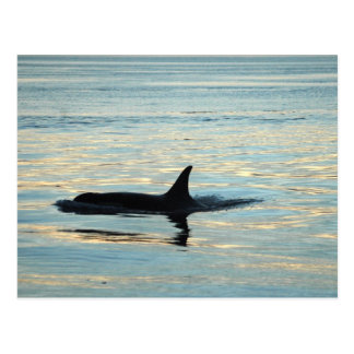 Orca Silhouette Postcard