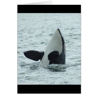 Orca Spyhop Greeting Card
