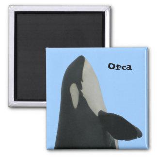 Orca Spyhop Magnet