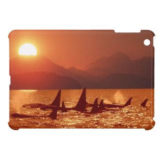 Orca Sunset: iPad Mini Case