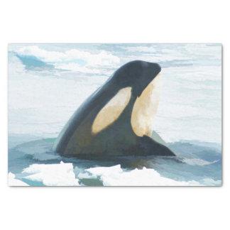 Orca Whale Spyhop blue Tissue Paper