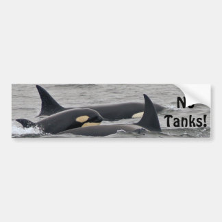 "Orcas ""No Tanks"" Bumper Sticker"