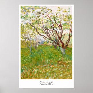 Orchard in Bloom Vincent van Gogh  fine art Poster