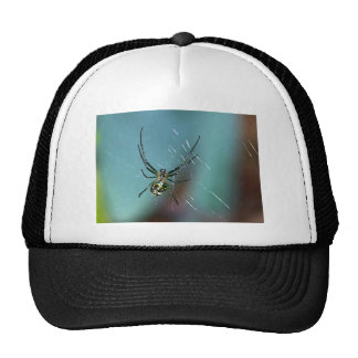 Orchard Orb Weaving Spider Cap