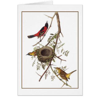 Orchard Oriole Card