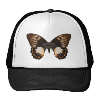 Orchard Swallow Tail Butterfly Trucker Hats