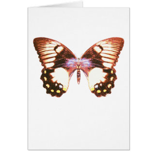 Orchard Swallowtail Butterfly Card