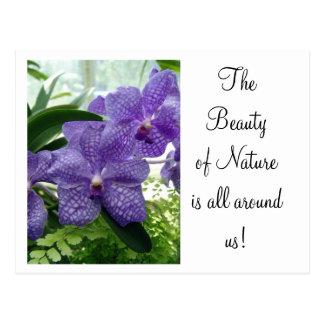 Orchard Violet Postcard