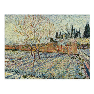 Orchard With Cypress By Vincent Van Gogh Postcard