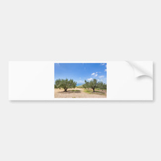 Orchard with olive trees at sea in  Greece Bumper Sticker