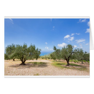 Orchard with olive trees at sea in  Greece Card