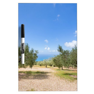 Orchard with olive trees at sea in  Greece Dry Erase Board