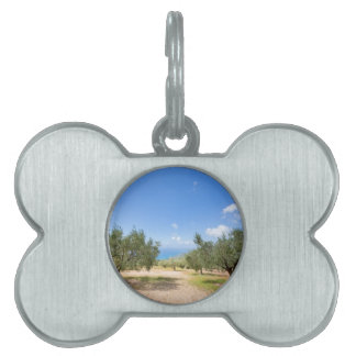 Orchard with olive trees at sea in  Greece Pet Name Tag