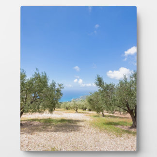 Orchard with olive trees at sea in  Greece Plaque