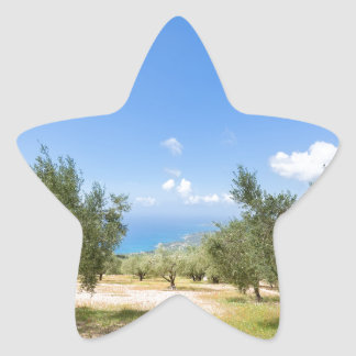 Orchard with olive trees at sea in  Greece Star Sticker